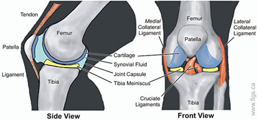 knee_web_MD
